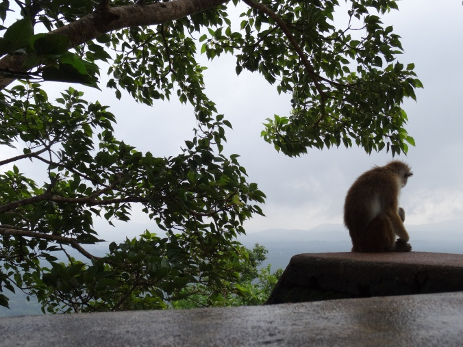Monkey on Sigiriya Rock, Sri Lanka