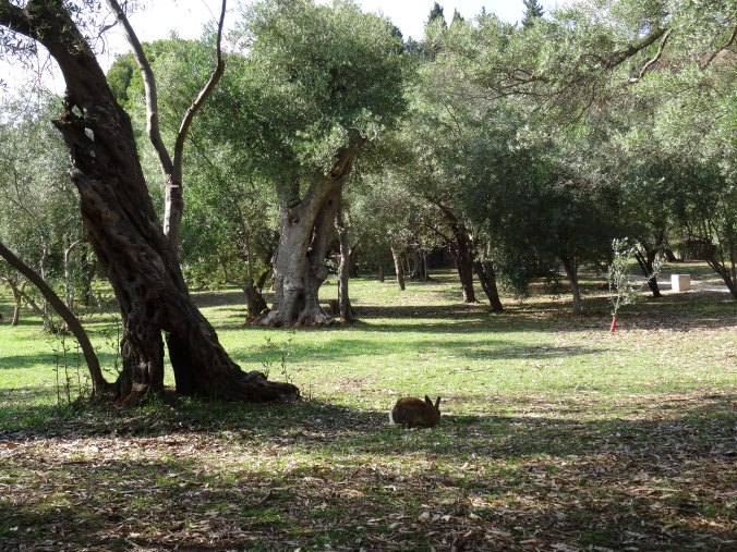 Rabbits in the olive grove, Lokrum