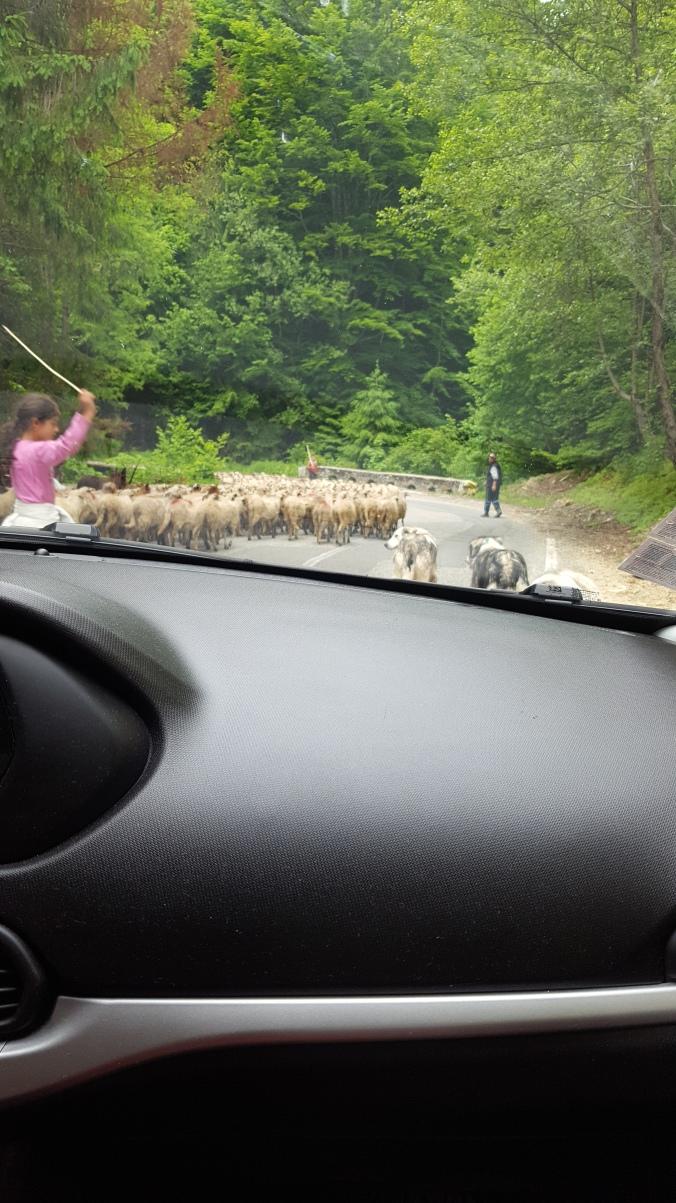 Transfăgărășan rush hour
