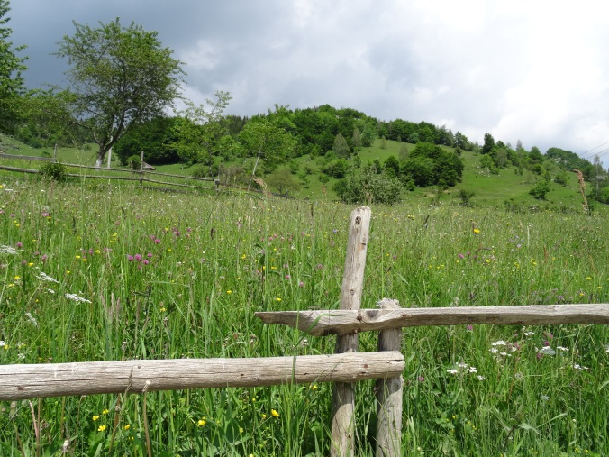 Meadow and wooden fence posts in Măgura