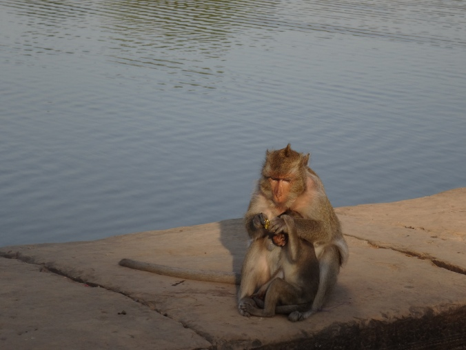 A monkey at Angkor Wat tucking into a sweet treat