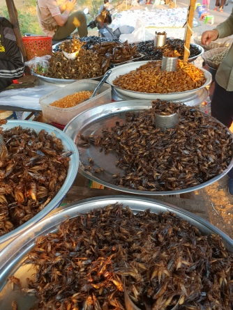 Various insect snacks for snails - I especially enjoyed the fried crickets