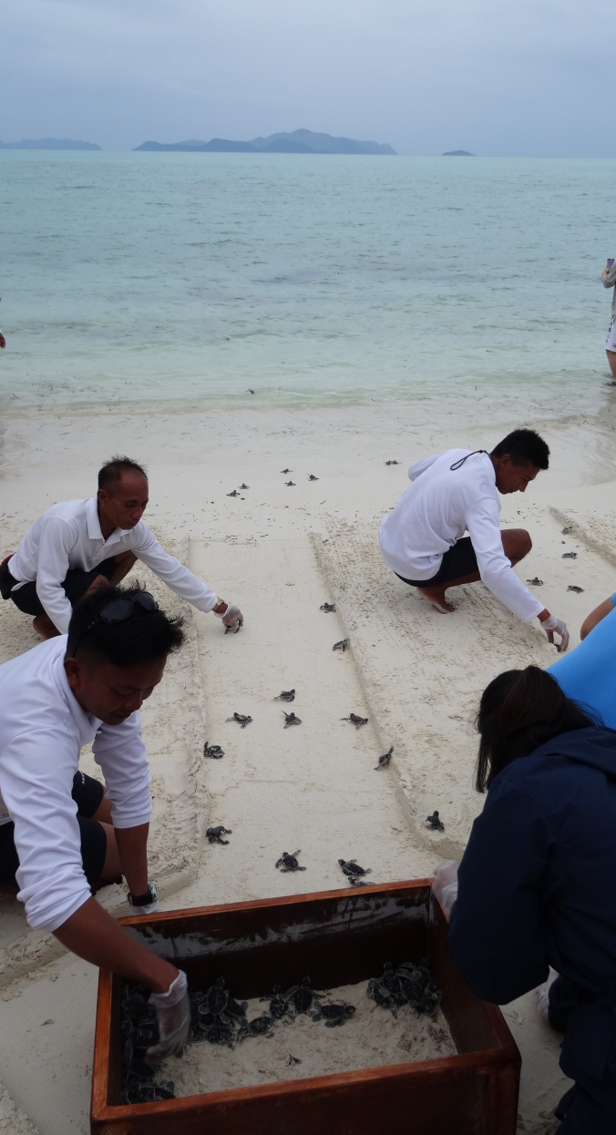 Turtle release on the Amanpulo beach
