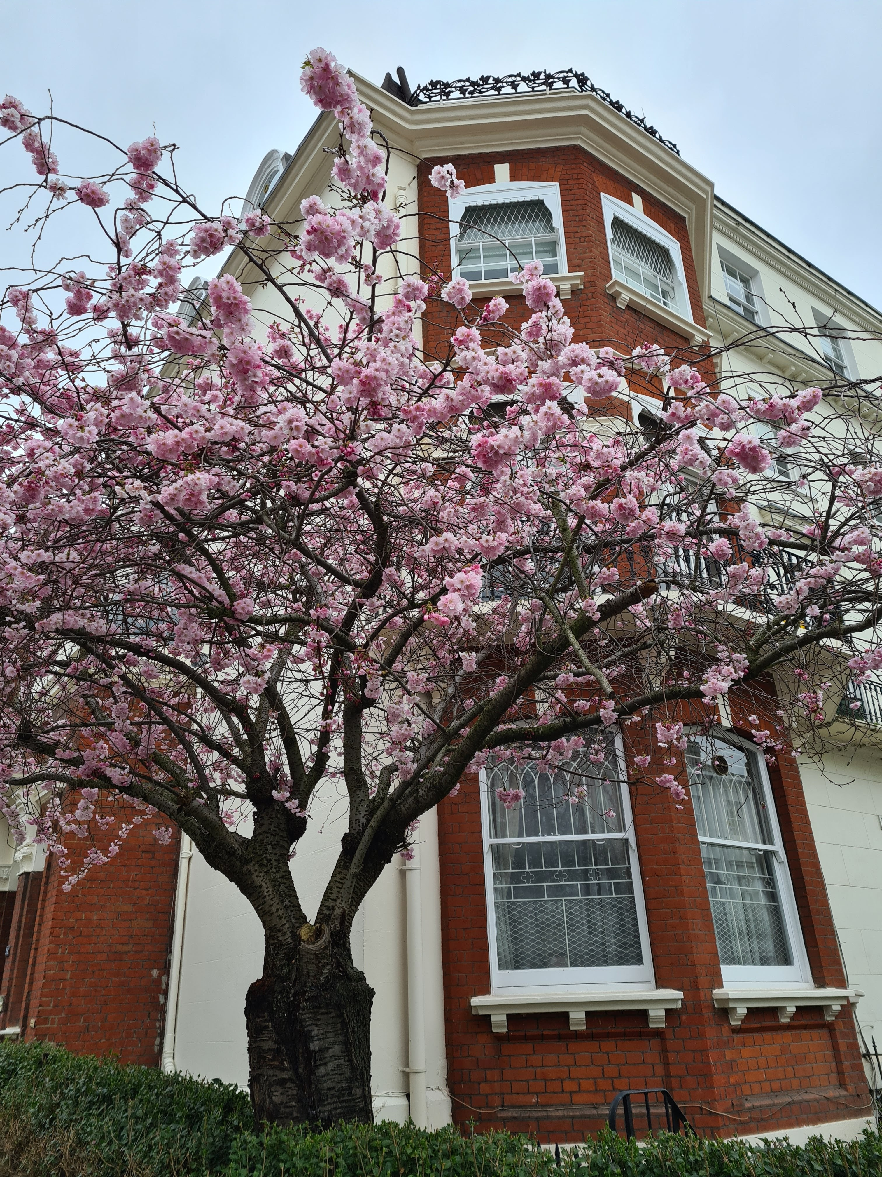 Instagrammable blossom London
