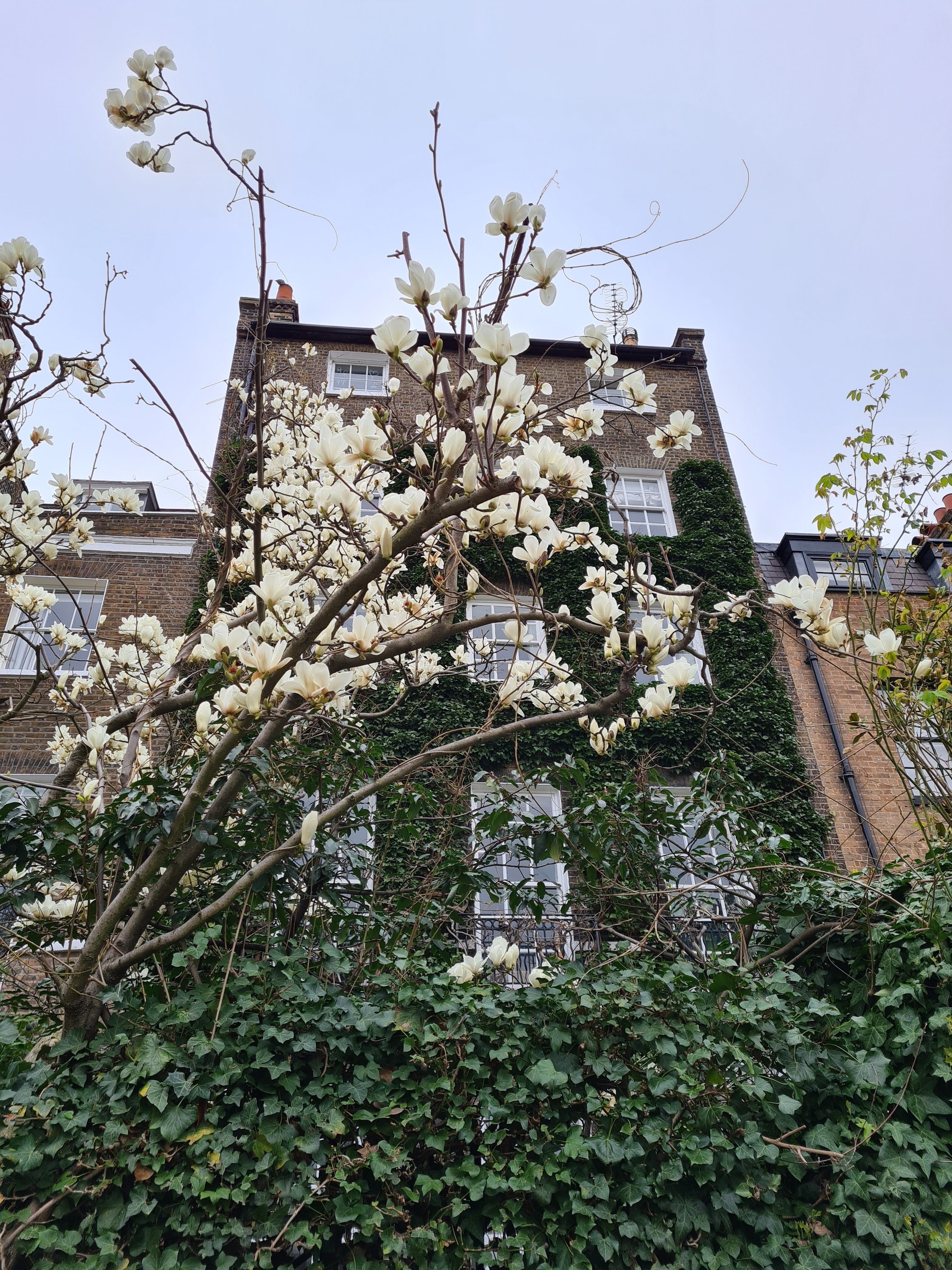 Instagrammable London blossom